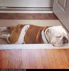The front step makes a great pillow -- when you're a tired puppy!