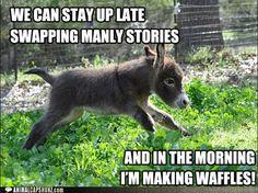 b30754b378b71fe746352674147d7264 mini donkey baby donkey shrek donkey the stairmaster happy funny pinterest shrek donkey,Donkey Waffles Meme