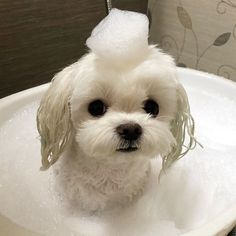 Like puppies, bunnies, babies, and so on. Super Cute Puppies, Cute Baby Dogs, Cute Little Puppies, Super Cute Animals, Cute Dogs And Puppies, Cute Little Animals, Cute Funny Animals, Doggies, Baby Animals Pictures