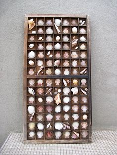 Double Vintage Printer Tray Seashell Display