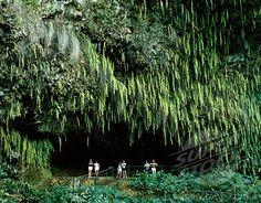 Fern Grotto, up the Walilua River, Kauai