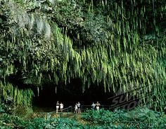 Fern Grotto, up the Walilua River, Kauai