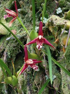 Orchid Display, Hawaiian Tropical Botanical Garden