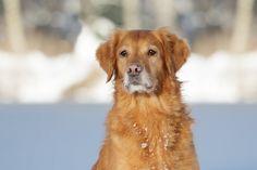 enjoying the winter sun at the lake  Copyright: SITZ UND BLITZ Hundefotografie