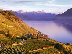 Lavaux, Vaud, Suisse // Lavaux, Waadt, Schweiz // Lavaux, Vaud, Switzerland  A UNESCO WORLD HERITAGE SITE