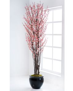 Pink Cherry Blossom Tree - 6ft