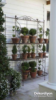 Love Garden, Garden Shop, Dream Garden, Garden Pots, Garden Rack, Shade Garden, Vegetable Garden, Back Gardens, Small Gardens