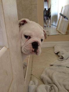 Dog peeking around corner meme