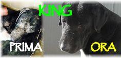 Se chiudi gli occhi muoio - King - http://hormiga.it/se-chiudi-gli-occhi-muoio-king/