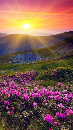 Beautiful Sunrise over a field Beautiful World, Beautiful Places, Landscape Photography, Nature Photography, Photography Flowers, Photography Ideas, Sunrise Photography, Travel Photography, Beautiful Sunrise