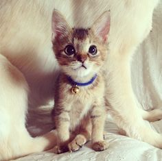 12 Instagrams Of The Cutest Kitten In History