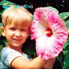 100 Pcs Giant Hibiscus Flower Seeds Rare Home Flower For Diy Garden Potted Yard Flower Plant Best Gift For Kids Bonsai Semente #clothing,#shoes,#jewelry,#women,#men,#hats,#watches,#belts,#fashion,#style