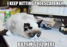 When you keep hitting the escape key but you are still at work. A funny work meme about the stresses of work, life and what have you. Gotta love funny cat memes!
