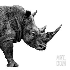 Safari Profile Collection - Rhino White Edition II Photographic Print by Philippe Hugonnard at Art.com