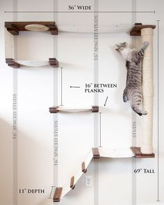 Cat Playground, Playground Design, Crazy Cat Lady, Crazy Cats, Cat Climbing Wall, Cat Climbing Shelves, Niche Chat, Cat Wall Shelves, Shelves For Cats