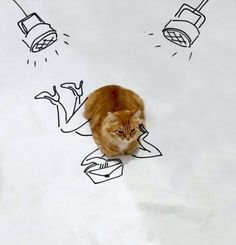 Internet Users Doodled on This Cat Photo to Make it Better (18 Pics) | Pleated-Jeans.com