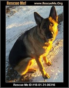 ― Minnesota German Shepherd Rescue ― ADOPTIONS ― RescueMe.Org
