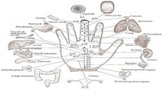 jin-shin-jyutsu-5-minute-hand-exercise-to-boost-your-energy-and-balance-your-emotions