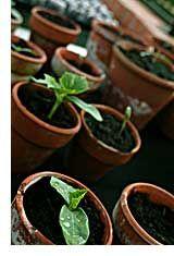 Organic Gardening Tips garden talk, 25 organ, thanksorgan garden, organic gardening tips