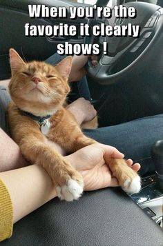 Funny Animal Pictures - 11 Images