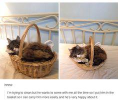 awe kitty :3
