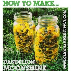 Is your yard overrun with dandelions? How about a neighbors yard? Don't let em go to waste; Pick them and turn em into dandelion shine! Here's a recipe: http://ss1.us/a/fYA71iWn