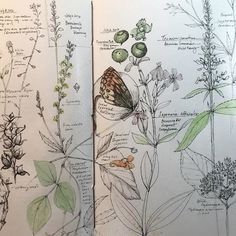 Lara Call Gastinger's Perpetual Journal — Kristin Link Nature Sketch, Nature Drawing, Sketch Journal, Sketchbook Pages, Garden Journal, Nature Journal, Botanical Drawings, Botanical Prints, Illustration Botanique