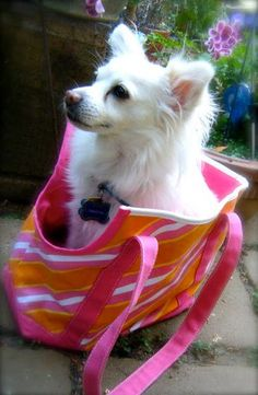 Tote your little dog around in style with this Legally Adorable Doggy Tote from Erika Lindquist.  Similar to the bag made famous in the movie, Legally Blonde, this fun and funky dog craft is a great way to travel with your BFF.