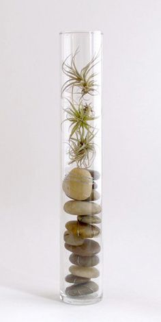 Creative Ways to Decorate with Air Plants!  Lots of Projects  Tutorials! I LOVE this!! Very simple and intriguing!