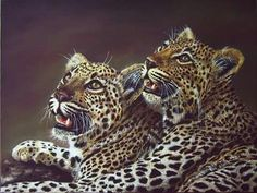 Image via We Heart It. Leopards