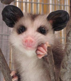 I don't care how you feel about opossums, this is cute!