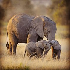 Etiqueta #WorldElephantDay en Twitter