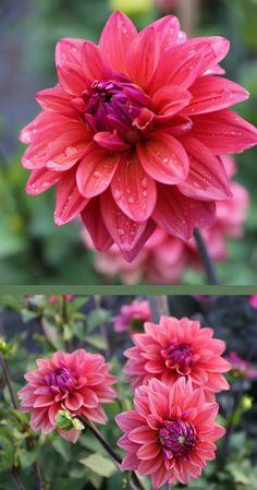 Exotic Flowers, Amazing Flowers, Pink Flowers, Beautiful Flowers, Cut Flower Garden, Flower Gardening, Garden Art, Garden Plants, Plant Fungus