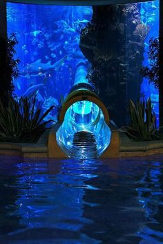 Amazing Places To Visit    Water Slide through Shark Tank at Golden Nugget in Las Vegas