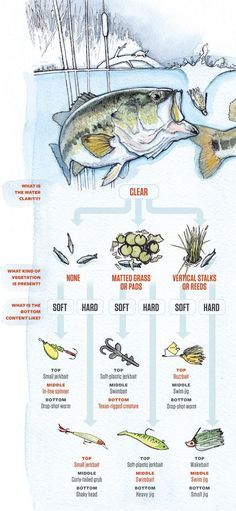 Bait guide : How to catch bass in any pond --Clear water