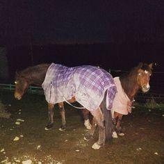 Those lovely quiet moments... #horse #horses #horseoftheday #horsesofinstagram #instahorse #instagramhorse #instagramhorses #pet #pets #petoftheday #petsofinstagram #instapet #instagrampet #instagrampets #hackney #pony #hackneypony #hackneyhorse #hackneyspirit #ahhs #ilovemyhorse #ilovemypony #ponychild #ponymare #equestrian #equestrianlife #horsebackriding #horseriding