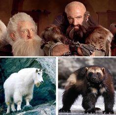 totem animals for the Dwarves