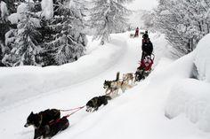 #sleddog #Valdidentro #Valtellina