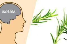 Pokrzywa i jej właściwości oraz zastosowanie w lecznictwie Herbs, Herb, Medicinal Plants