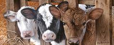 Got Milk? by Jerry Gadamus
