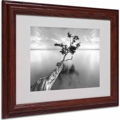 Trademark Fine Art Water Tree Xiii Matted Framed Art by Moises Levy, Wood Frame, Size: 11 x 14, Multicolor