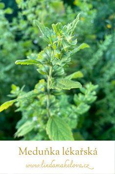 Detox, Herbs, Herb, Medicinal Plants