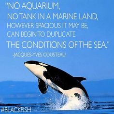 """""""No aquarium, no tank in a marine land, however spacious it may be, can begin to duplicate the conditions of the sea."""""""
