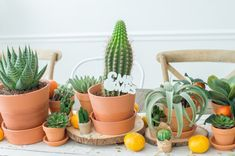 A Boho-Inspired, Cactus & Succulents-Themed Bridal Shower – Luv Bec