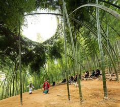 Bamboo Theatre / DnA