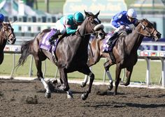 2011 Horse of the Year Zenyatta