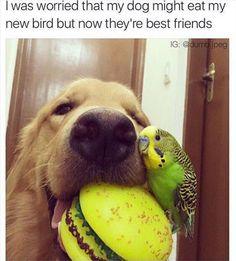 Friendship between species