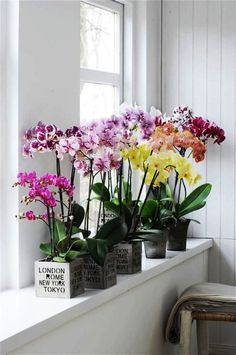 Blumen Orchid care tips and interesting information about the exotic beauties of colorful flowers ar Easy Plants To Grow, Growing Plants Indoors, Orchids Garden, Orchid Plants, Moth Orchid, Roses Garden, Orchid Flowers, Fruit Garden, Feng Shui Plants