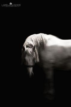 www.pegasebuzz.com | Equestrian photography : Lars Von De Goor