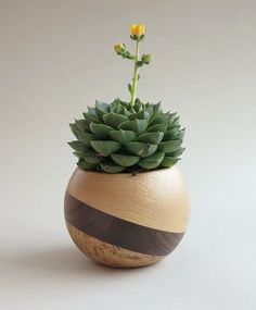 Sphere Succulent Air Plant Planter Wood by BulgarMaster on Etsy